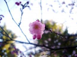 flower 042009