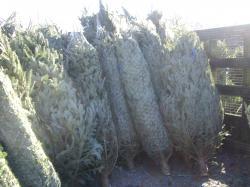 xmass tree 082