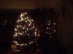 xmas tree 084