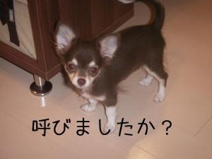yobu.jpg