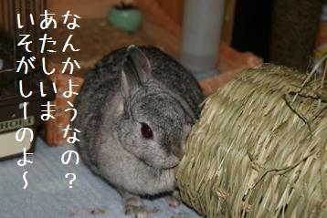 20080614_2.jpg