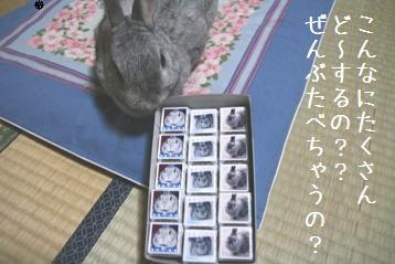20080616_2.jpg