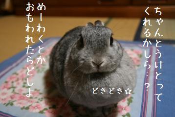 20080616_3.jpg