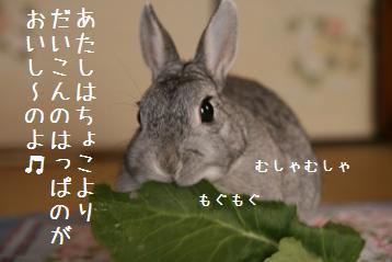 20080616_5.jpg