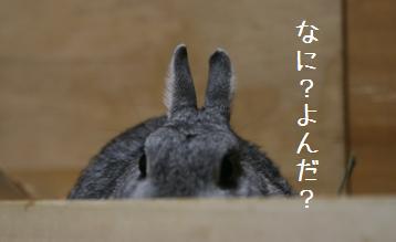 20080629_2.jpg