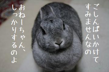 20080629_4.jpg