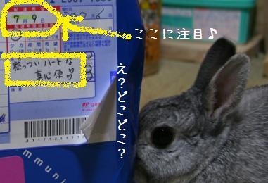 20080709_9.jpg