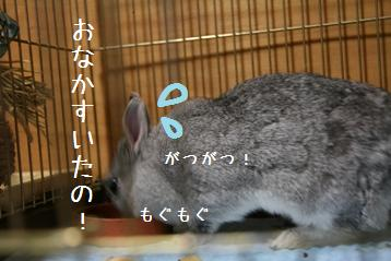 20080712_2.jpg