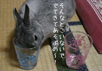 20080712_6.jpg