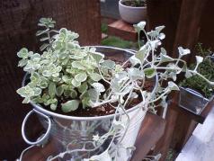 0804植物