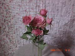 薔薇+アイビー15