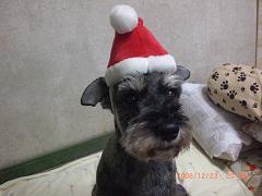 淳のクリスマス15