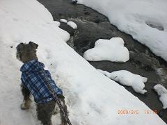 春の川を散歩15