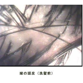 20051225235216.jpg