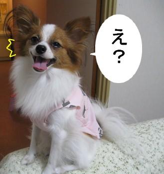 azuki6.jpg