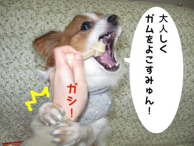 beji7.jpg