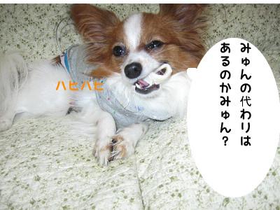 beji9.jpg