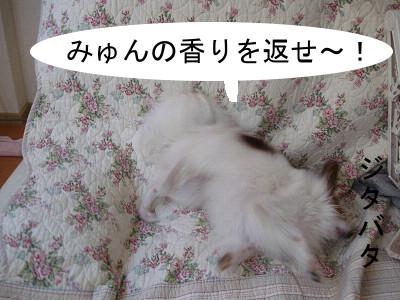 furo4.jpg