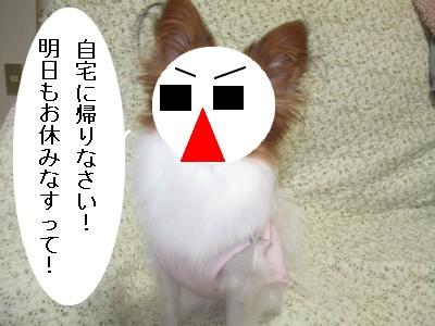 kazedesu2.jpg