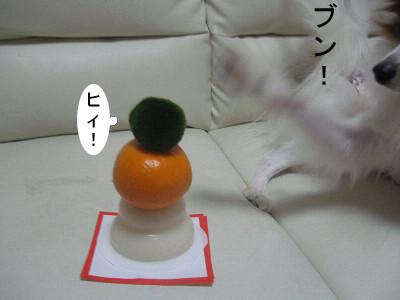 ne8.jpg