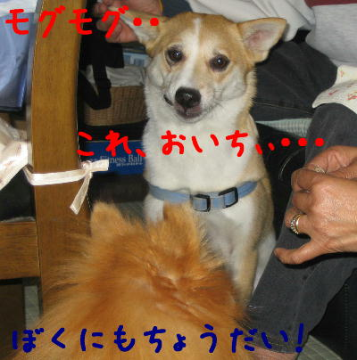 20050513a.jpg