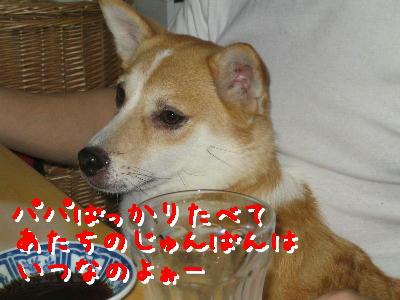 20080426d.jpg