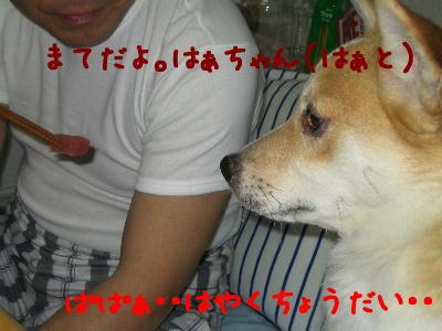 20080426g.jpg