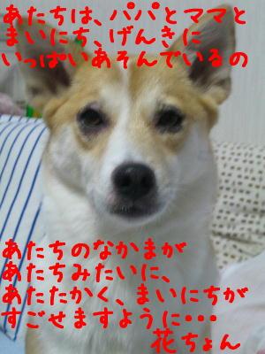 20080426j.jpg