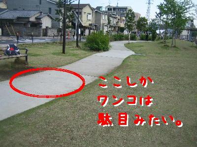 20080428a.jpg