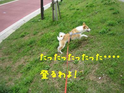 のぼるわよ! 440