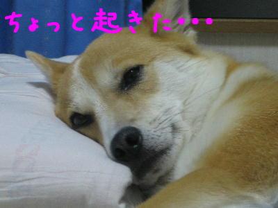 また寝てる・・2