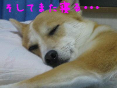 また寝てる・・3