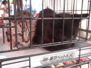 ケンの家さんのネコ