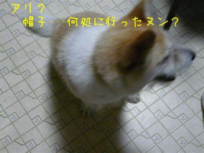 4gNym8iH.jpg