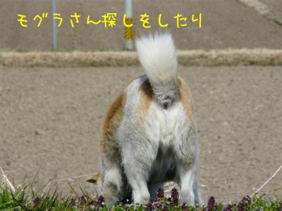V1_Lykqa.jpg