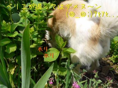 c8Y0CEP3.jpg
