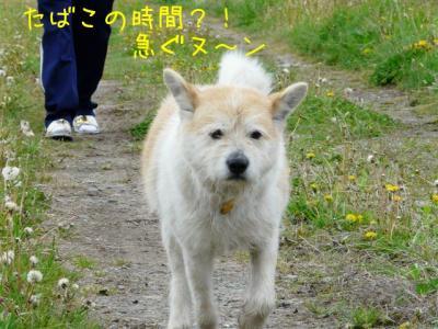 pYQoqY_x.jpg