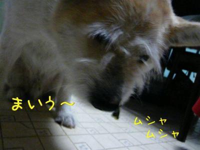 zNQUjb83.jpg