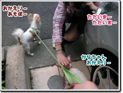 かなちゃん おかえり~