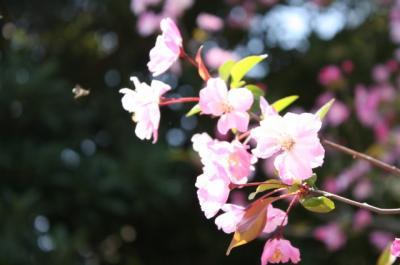 2009年 桜⑤