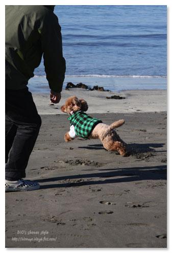 逗子海岸お散歩