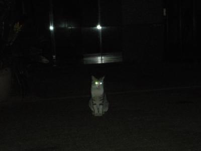 なつかない猫