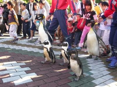 ペンギンのパレード