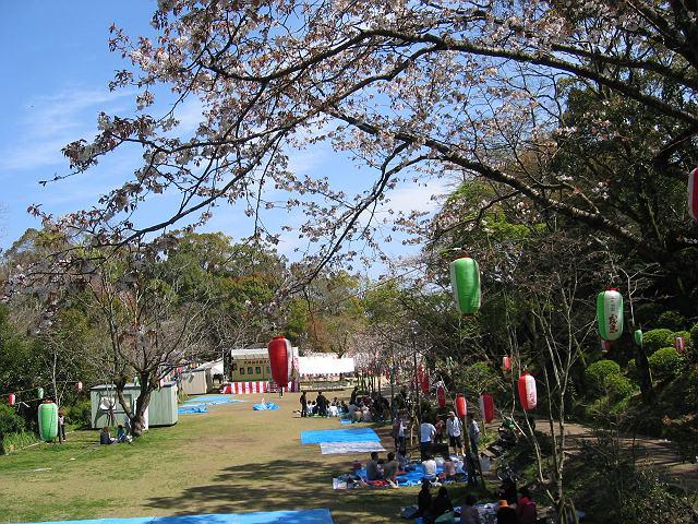 tenjinsakura036.jpg