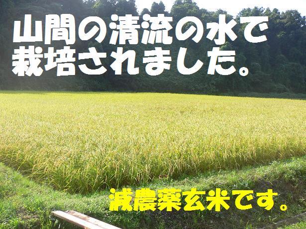 山間の清流で栽培されました、能登産玄米!