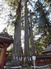 12 1 10oyakosugi(2)