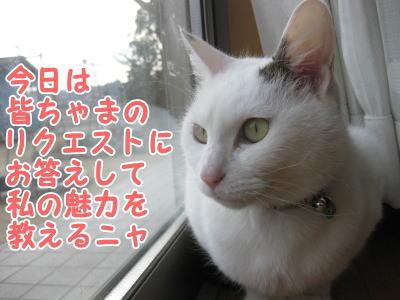 image03101.jpg