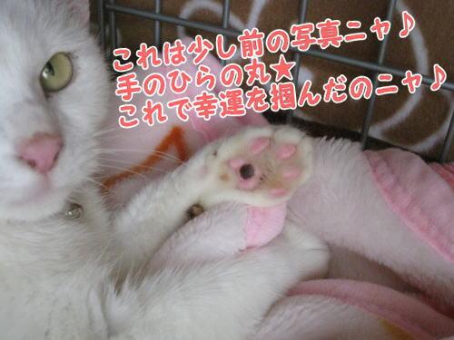 image03107.jpg