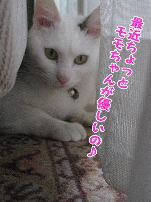 image04153.jpg