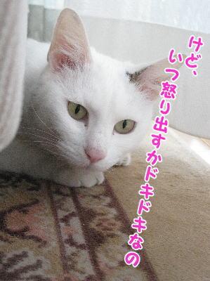 image04155.jpg